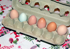 hen eggs with different colors