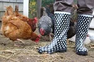 fancy chicken boots