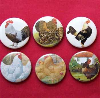 chicken magnets