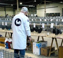 poultry judge