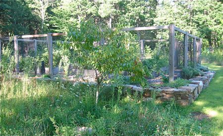 peach tree and vegetable garden