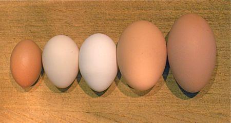 todays-eggs