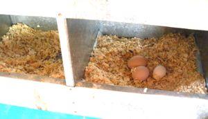 egg-sharing