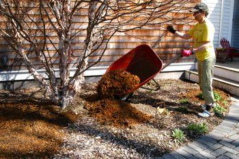 compost-tree