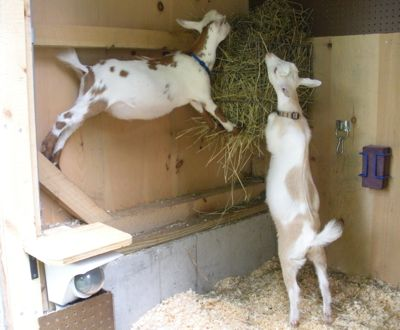 acrobatic-dining