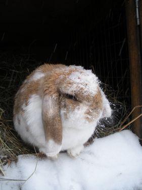 snow on bunny