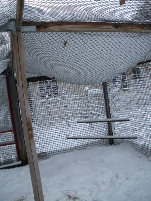 snow on netting
