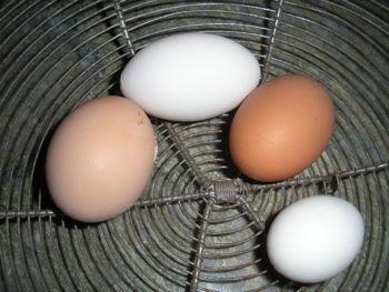 pointy egg