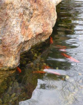 Squish squish fish hencam for Squish the fish