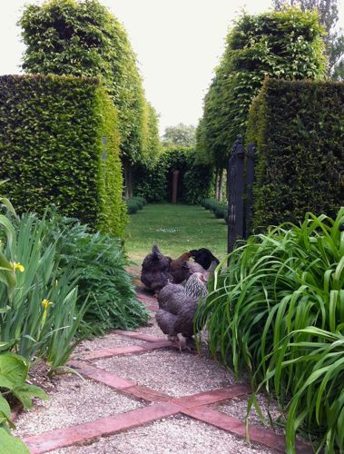 Gardening With Chickens   HenCam